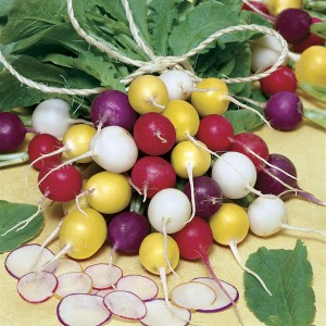 Radishes are quick (about a month) and easy to grow, yet the feeling of accomplishment they bring is awe-inspiring!
