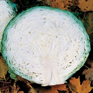 They don't call me Megaton for nothing. I will grow to be as big as a bowling ball, gobbling soil nutrients every step of the way!