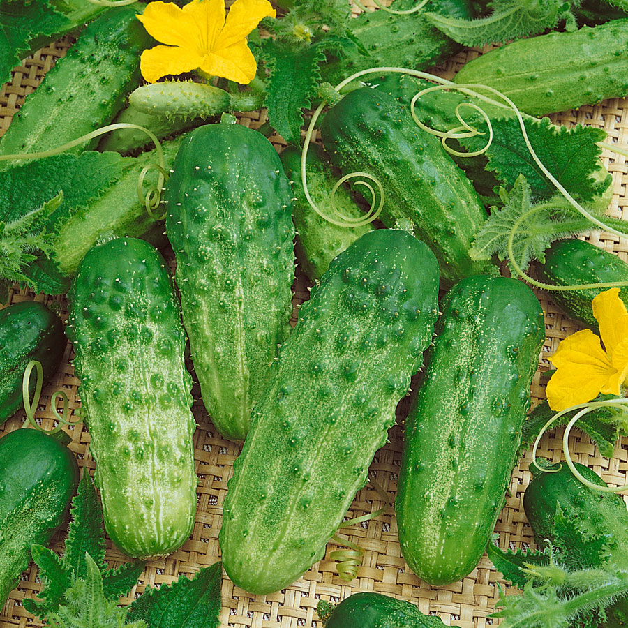 Your Cucumbers 39 Best Friends Official Blog Of Park Seed