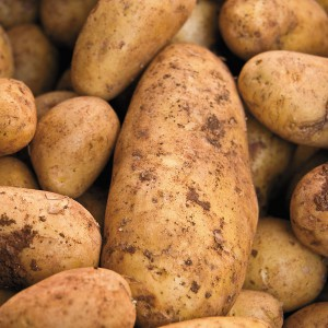 Lurking under the soil like submarines, potatoes mean your squash no good!
