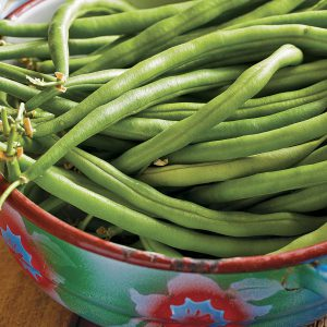 Do you have time for another crop of Provider beans? Ready in 50 days, it's super-fast . . . and so good for the garden soil!