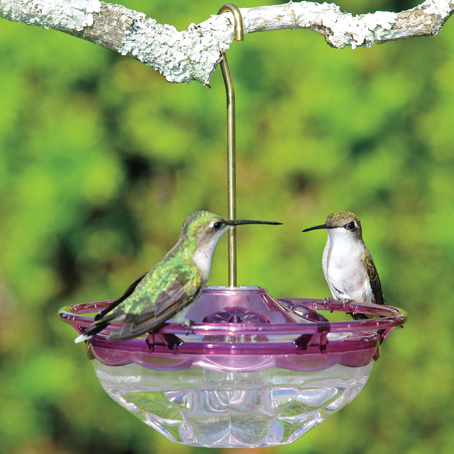 how to keep finches away from hummingbird feeders