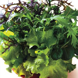 Ready in no time, lettuce can be sown every week from late summer to mid-fall!