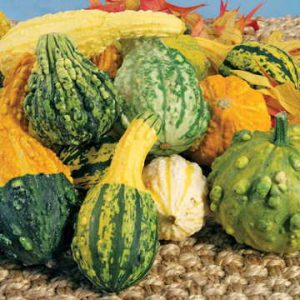 You will be so glad you grew these charming autumn fruits!
