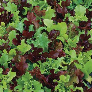 Ready in just a couple weeks, micro greens are a great compromise between sprouts and baby greens!