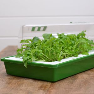 The white insert contains several drainage holes and sits slightly above the base of the green tray. It is removable for easy cleaning. Just fill it with starting mix and sow your seeds!