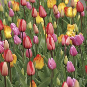 Some gardeners have an eye for mixing color. The rest of us rely on fabulous mixes like this one!