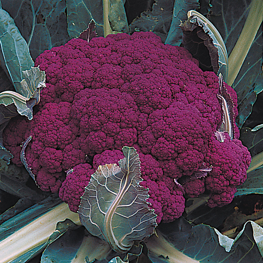 The Merits of Growing Vegetables in Fall