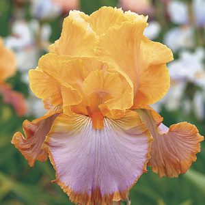 Not only will deer leave it alone, but Iris will spread over time, so you can make new plants from old!
