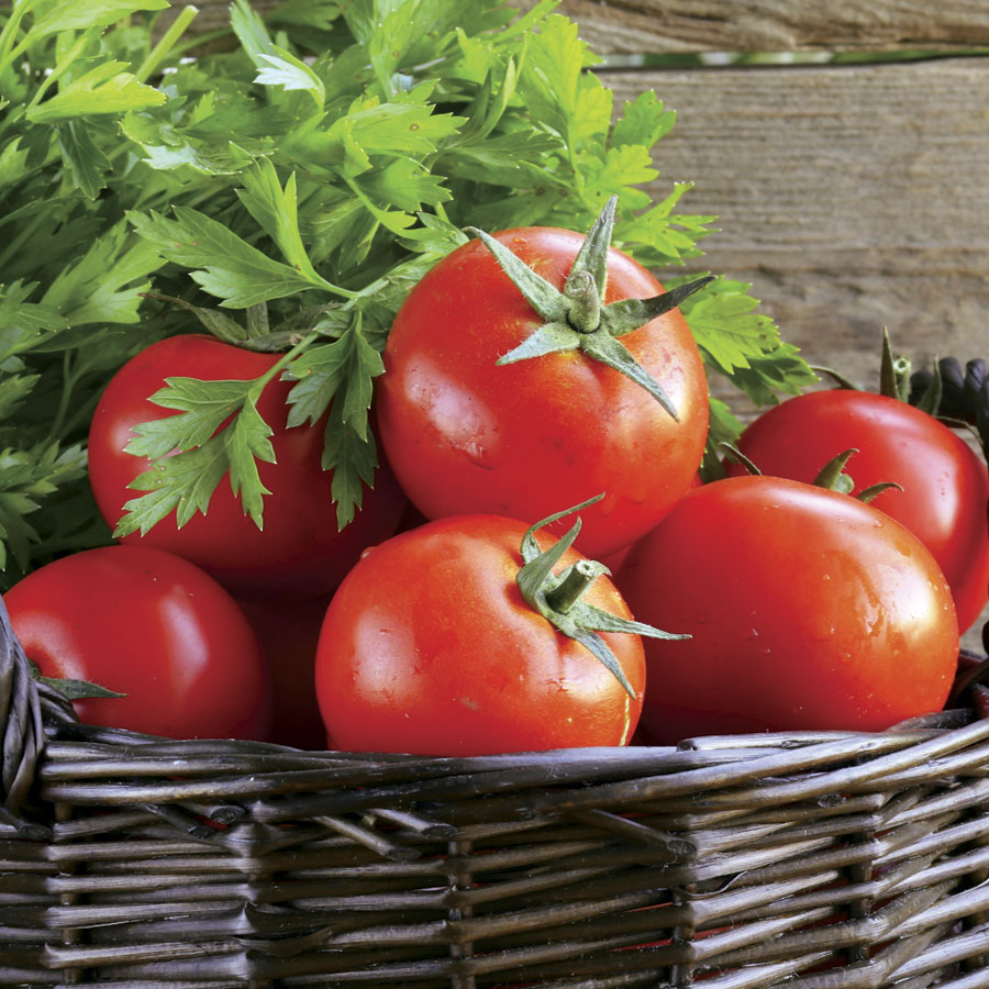 Guide to Growing Celebrity Tomatoes - Gardening Channel