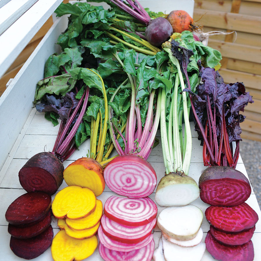 The Benefits of Growing Your Vegetables from Seed