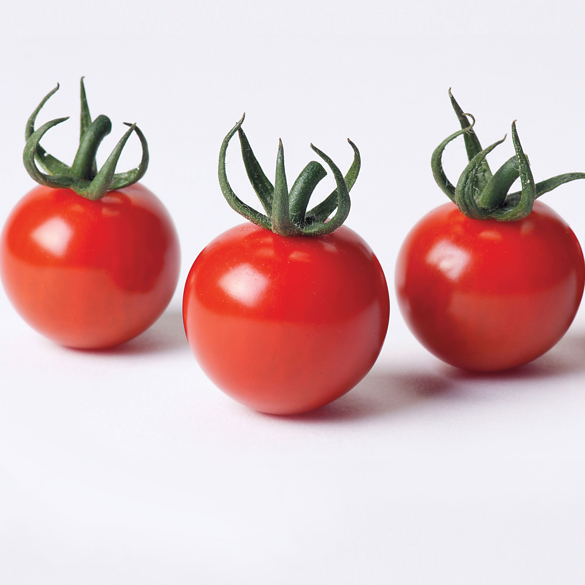 Terms of sowing tomatoes
