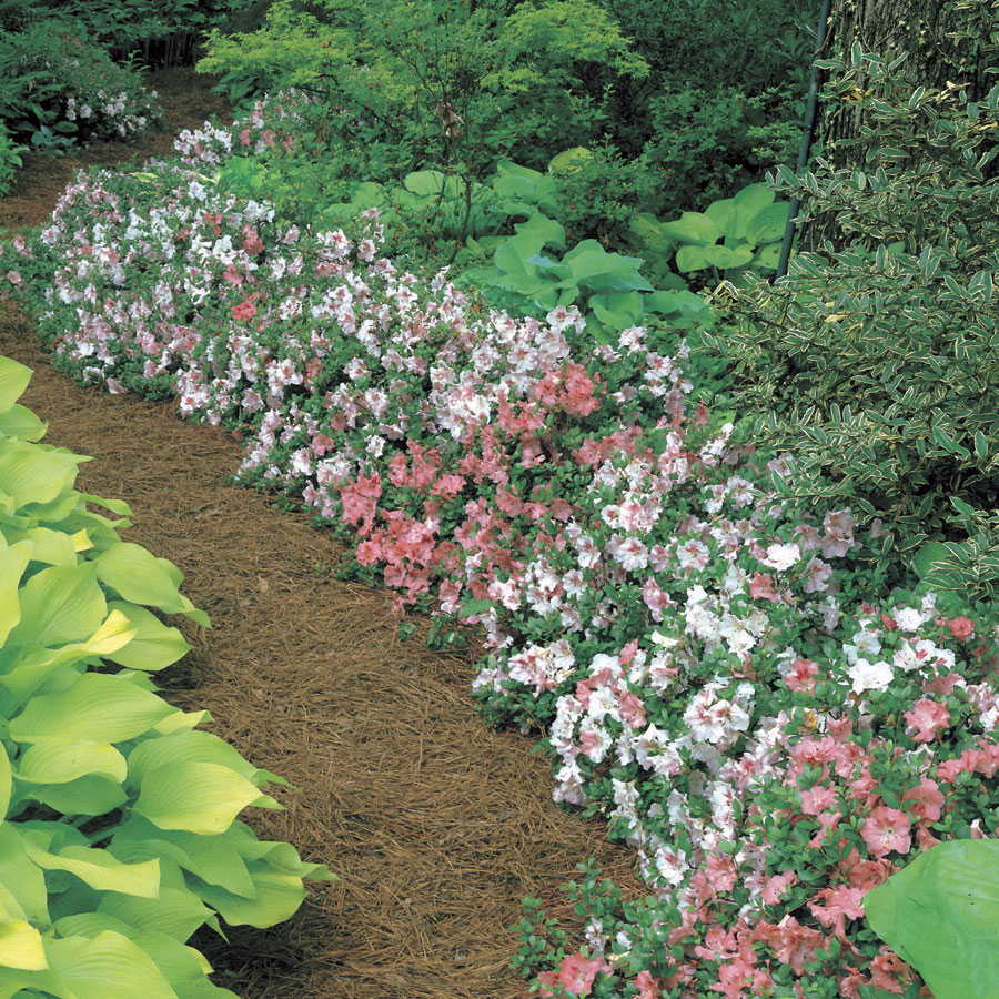 3 Tips For Shade Perennials Official Blog Of Park Seed