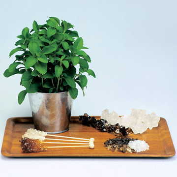 20 to 30 times sweeter than sugarcane, stevia is a natural source of sweetness that doesn't add calories or harm your teeth!