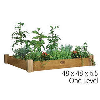 """Plant stevia in a raised bed or mound your own little """"hills"""" for these plants."""