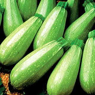 If you planted crooknecks and zucchini in spring, consider something new for your second harvest -- like yummy, versatile Magda Squash!