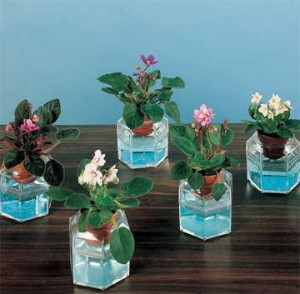 Yes, this picture is ghastly, but you do not have a home that resembles a lab circa 1966. The Teacup African Violets are truly delightful, especially on desktops under fluorescent office lights!