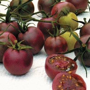 Chocolate Cherry has all the rich tomato flavor you crave, packed into 1-inch fruits!
