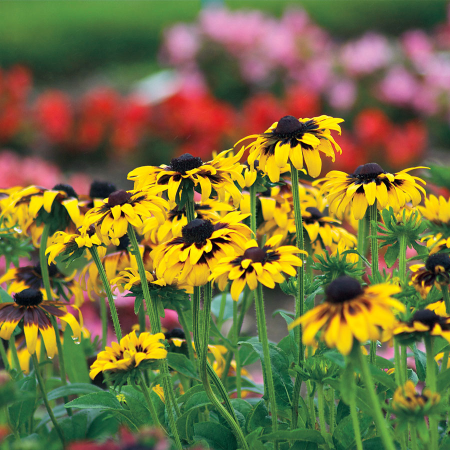 Perennials Blooming The First Year Official Blog Of Park Seed