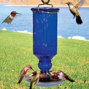 If only all hummingbirds were as cooperative as this group! Don't worry if your feeder has only one bird visiting it. Just place other small feeders around to conquer territorial issues.