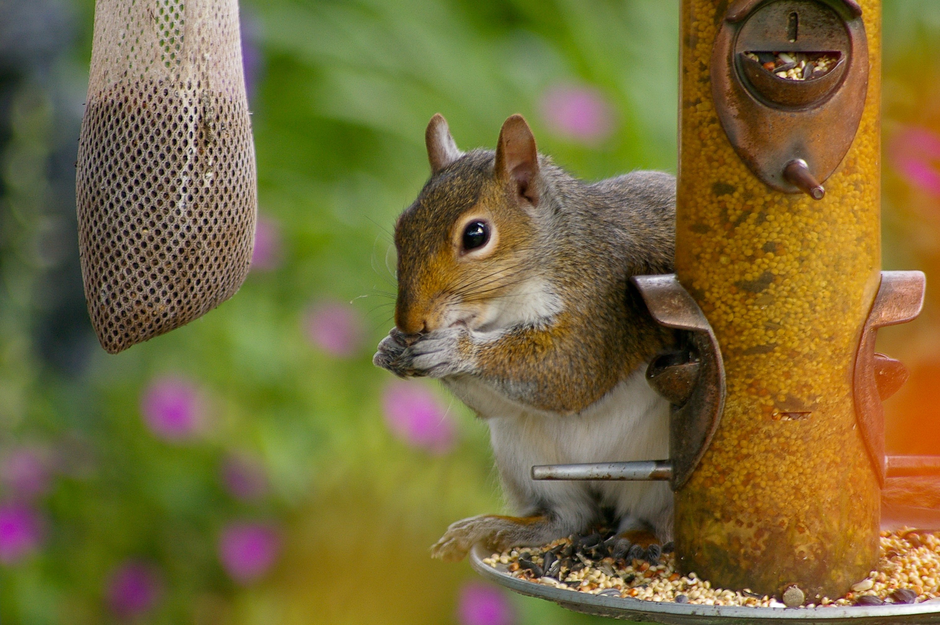 free modern bird proof small easy feeder squirrel of house plans with australia
