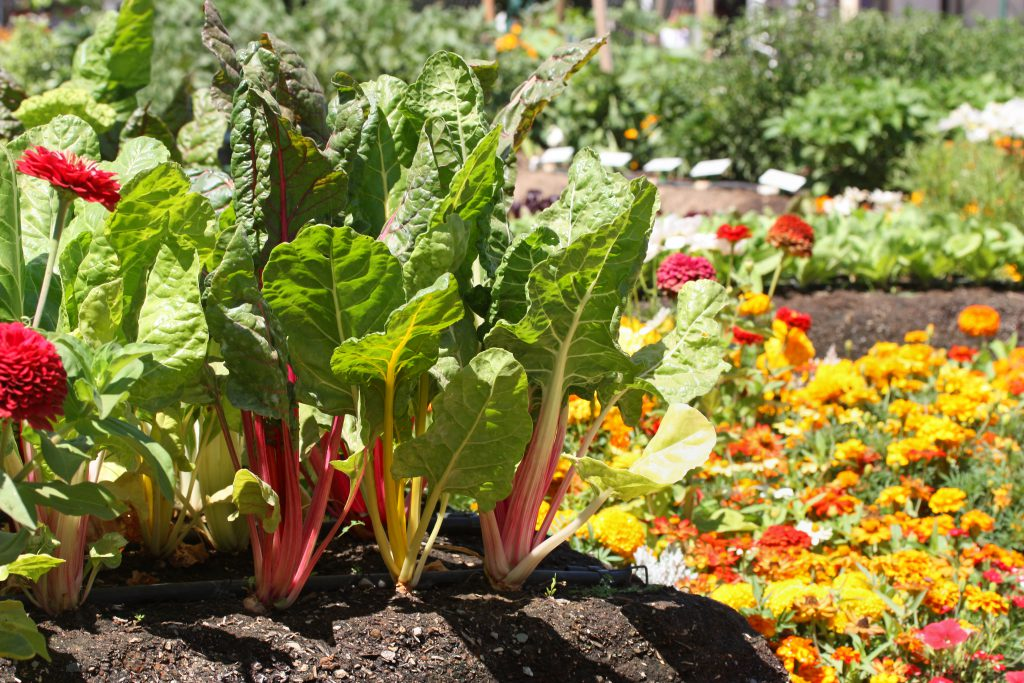 Fresh young garden with vegetables and flowers