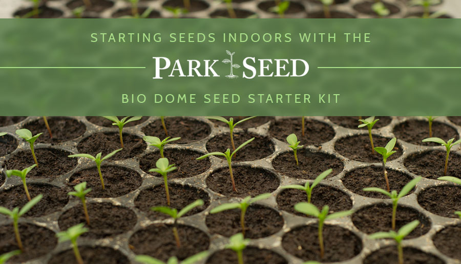 starting seeds indoors park seed bio dome seed starter kit