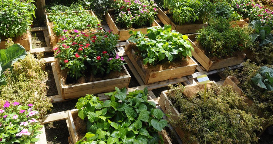 fruit vegetables planted in recycled boxes