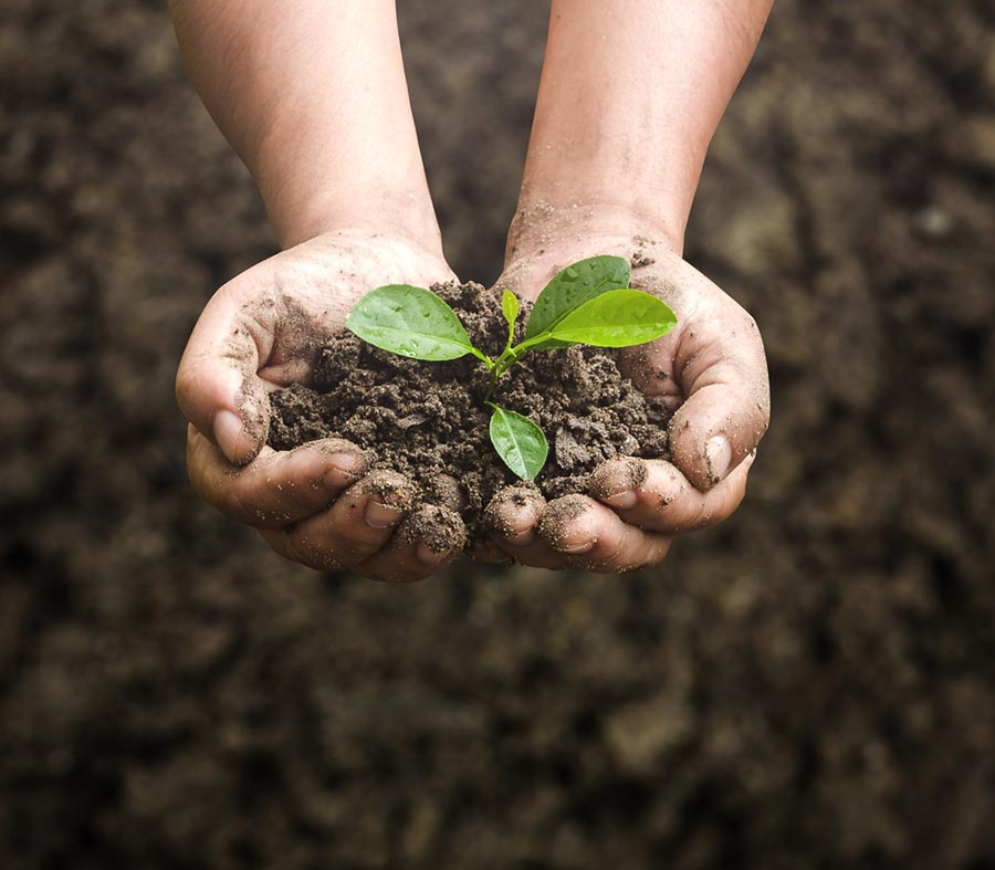 hands holding compost with seedling growing