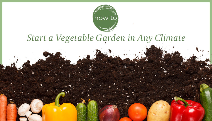 how to start vegetable garden any climate