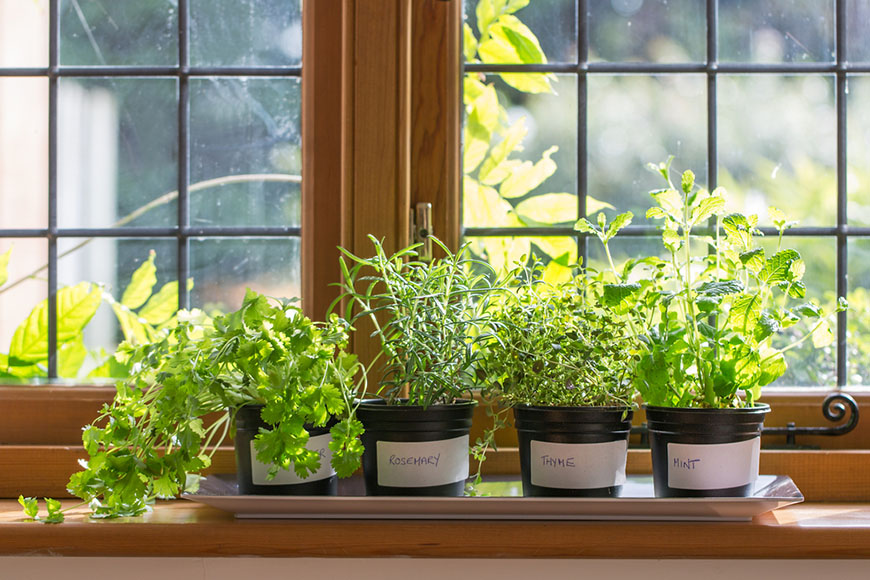 herbs plant pots growing windowsill