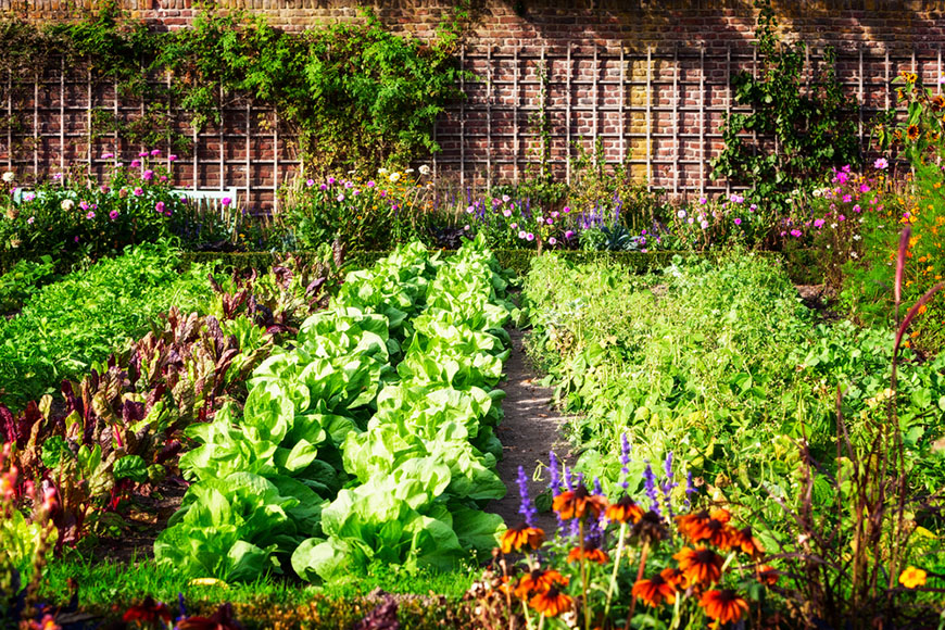 Vegetable garden in late summer