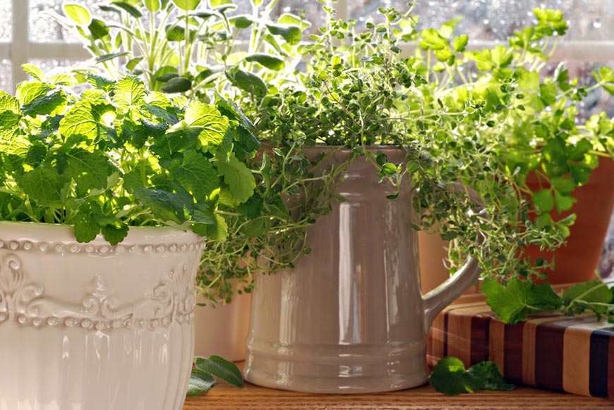 kitchen herb garden potted