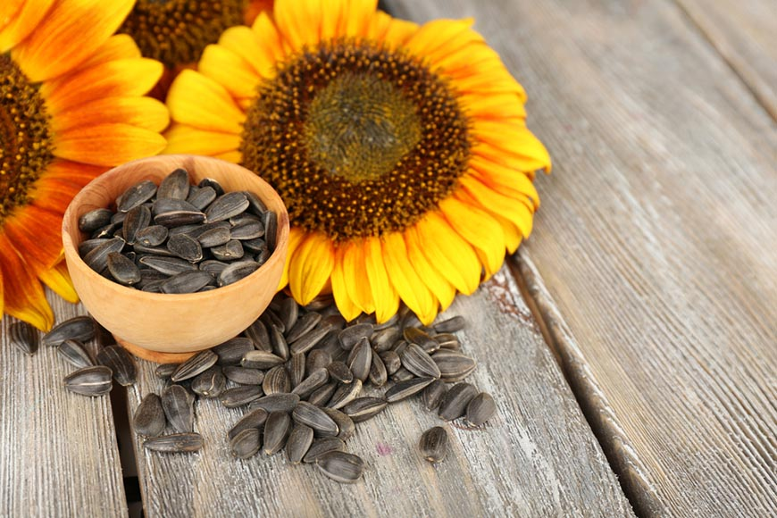 sunflower with seeds on wooden table