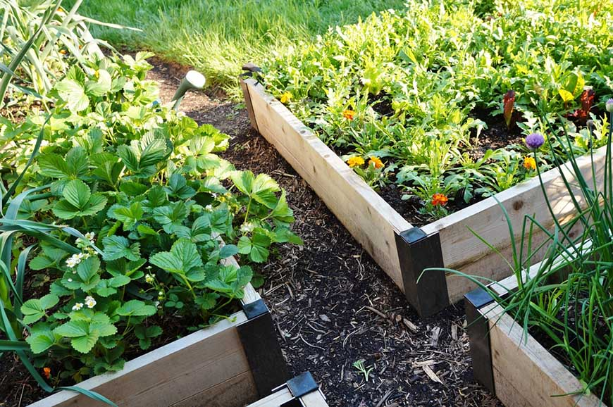 quadrant of raised garden beds