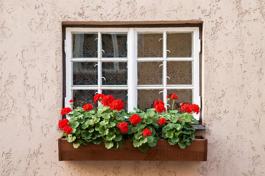 window with decorated geranium flowers