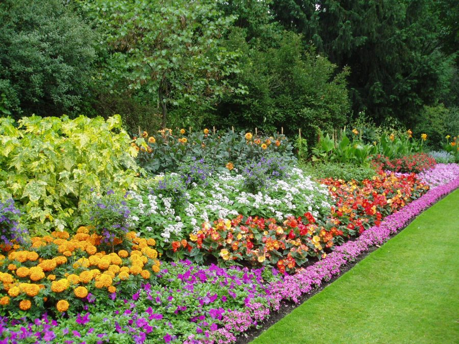 Planning Your Next Spring Flowerbed