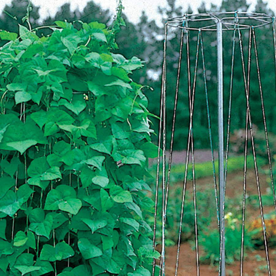 Supporting Vining Plants in the Garden